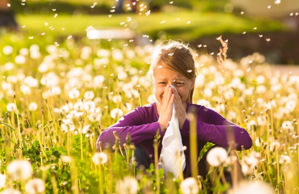 nysa allergi